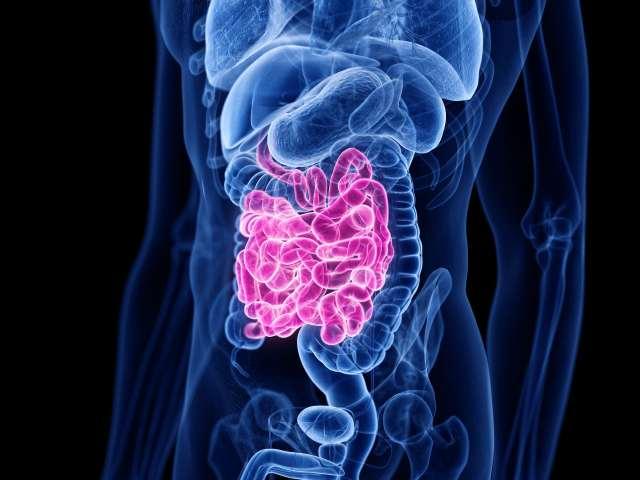 illustration of small intestine amid other organs