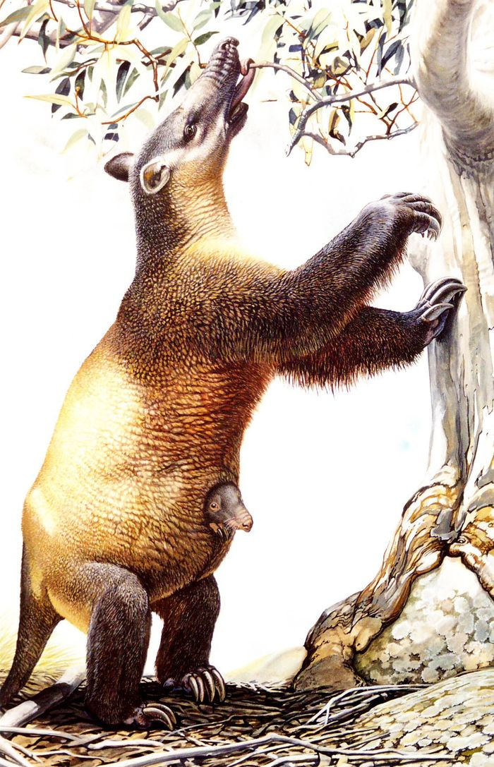 Painting of Palorchestes rearing up against a tree