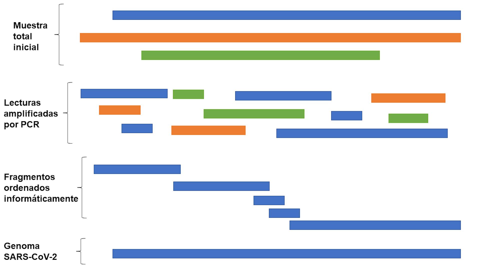 Secuenciación del genoma de SARS-CoV-2 a partir de muestras de pacientes. Elaboración propia.