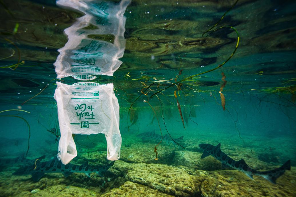 Plastic bag drifting in shallow water