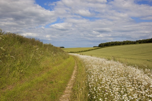 A grassy bridleway with a border of white wildflowers.