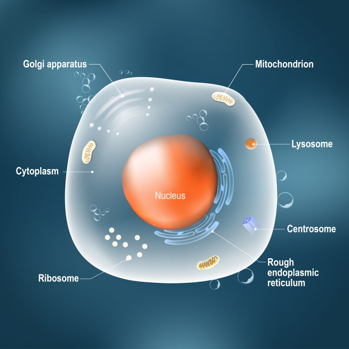 diagram of a generic cell featuring nucleus and other structures