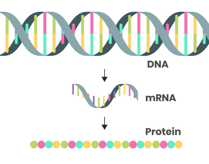 schematic of DNA, mRNA and a protein
