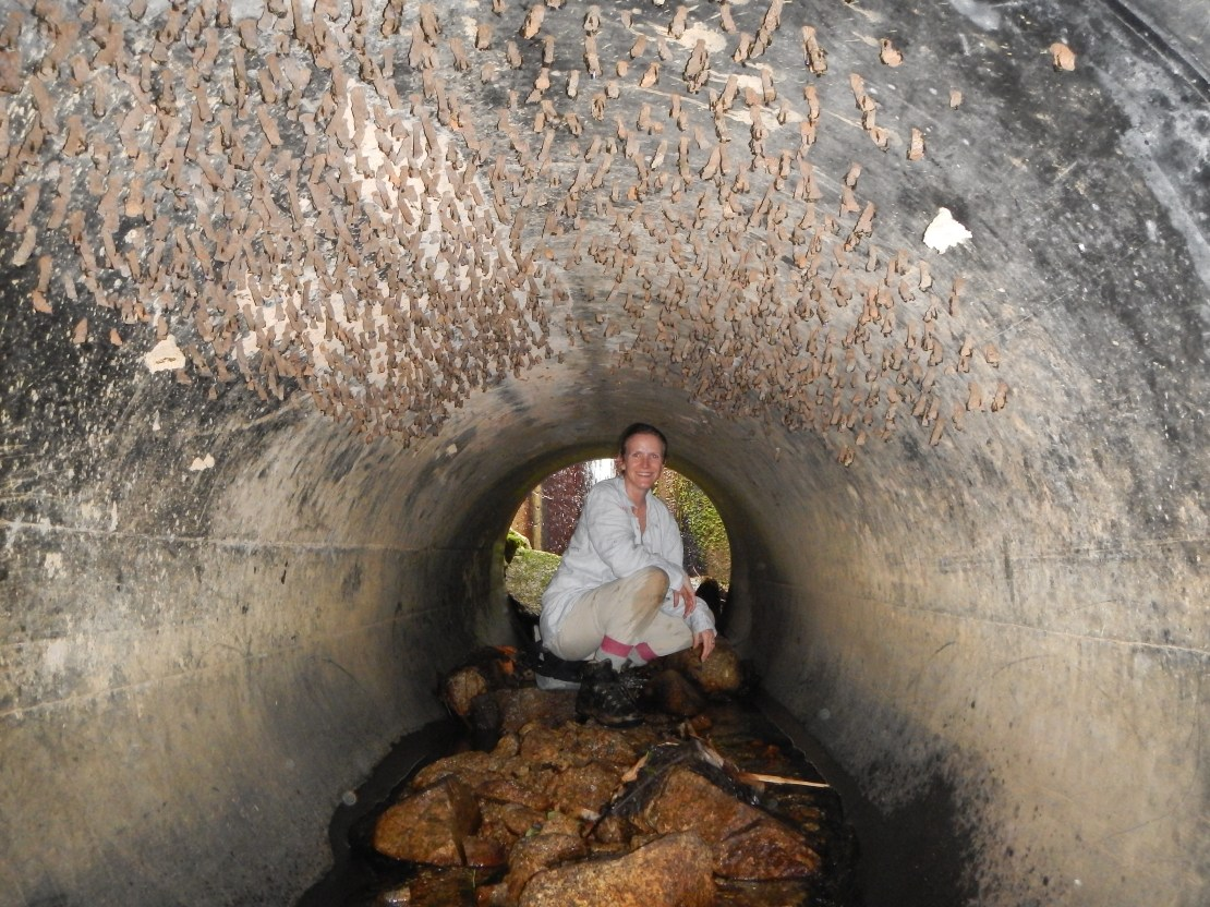 woman squats in cement tunnel, ceiling covered in insects