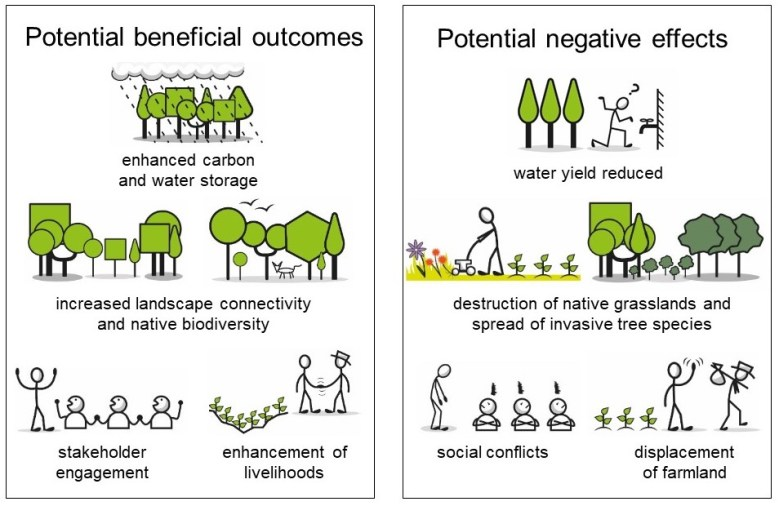 Cartoon showing benefits and harms from tree-planting.