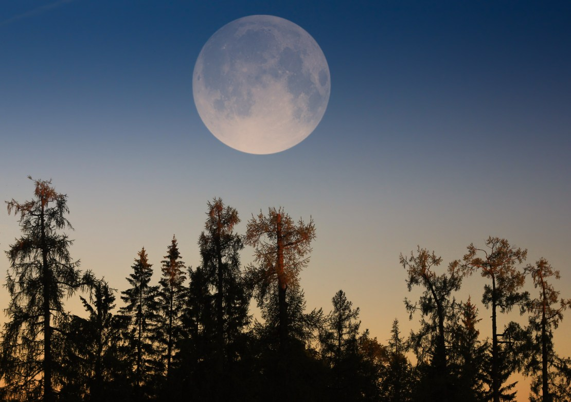 A full moon above trees.
