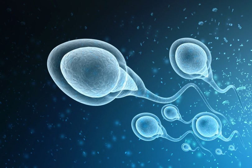 An illustration of sperm.