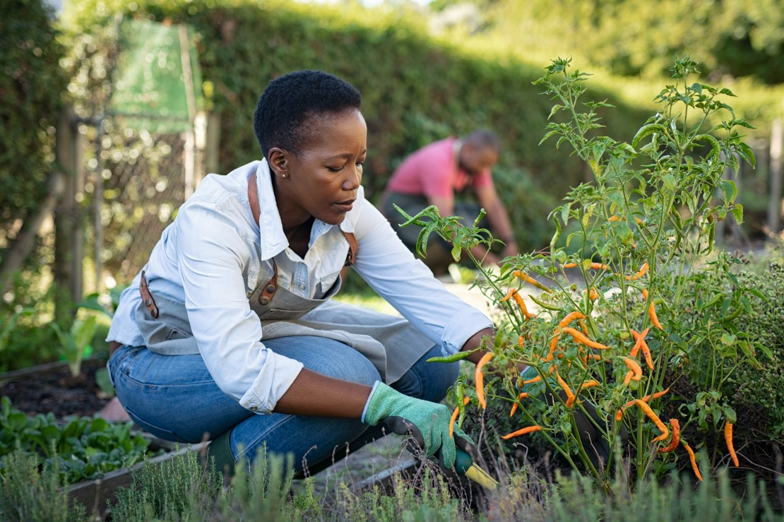 Woman crouches while she gardens.