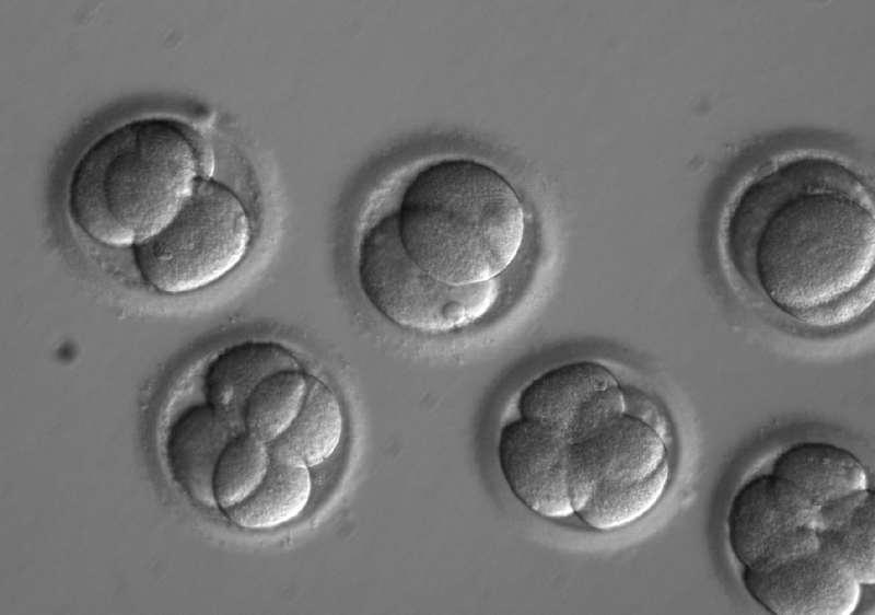 Human embryos