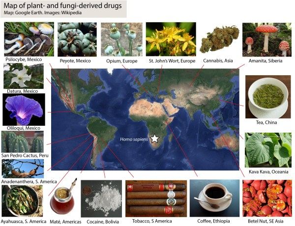 A map showing where different drugs originated