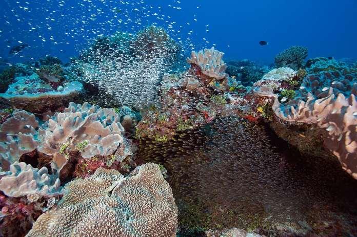 Schools of fish swimming over reefs