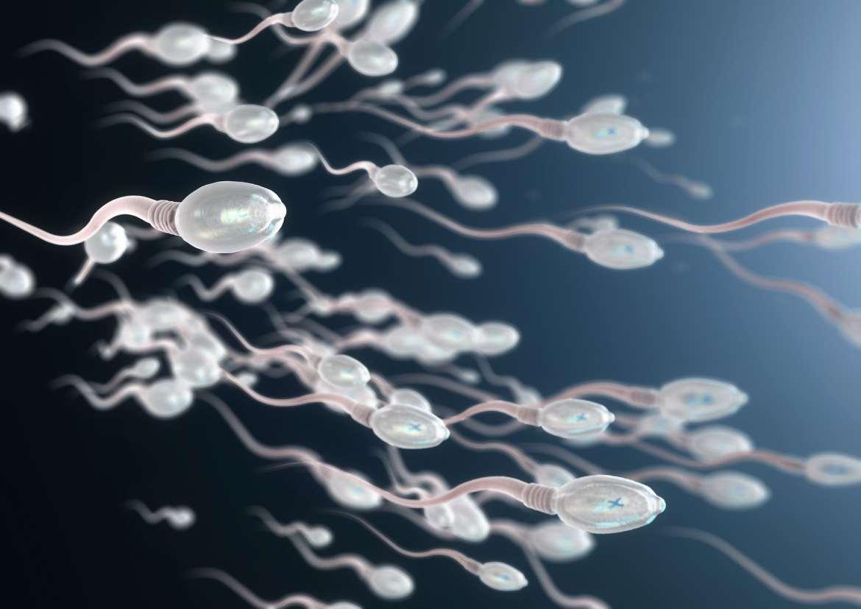 Una ilustración de los espermatozoides humanos.