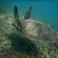 Not declaring the Great Barrier Reef as 'in danger' only postpones the inevitable; John Day, Scott Heron & Terry Hughes; Conversation