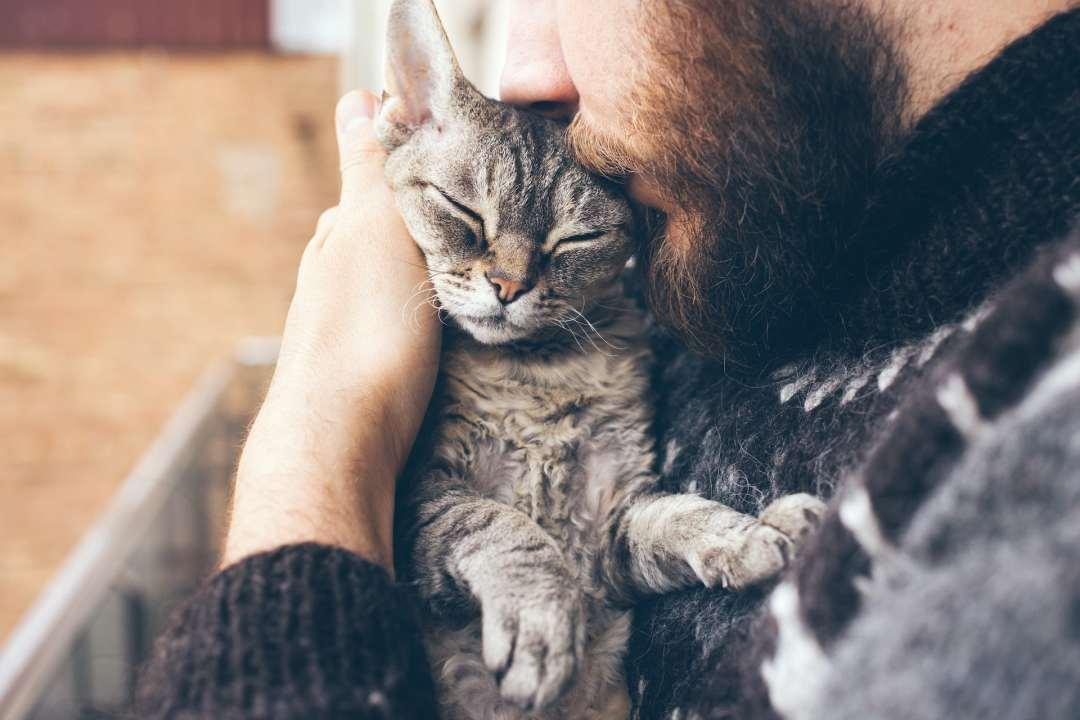 Man with beard kisses pet cat