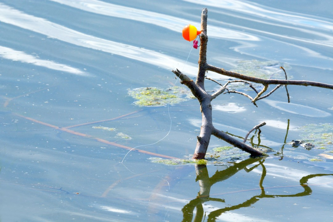 fishing line and bobber wrapped around twig in water