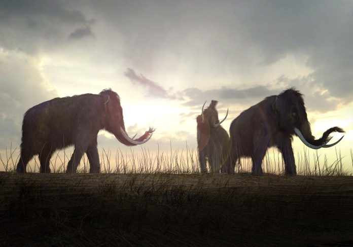 Rendering of the Woolly Mammoth on the field.