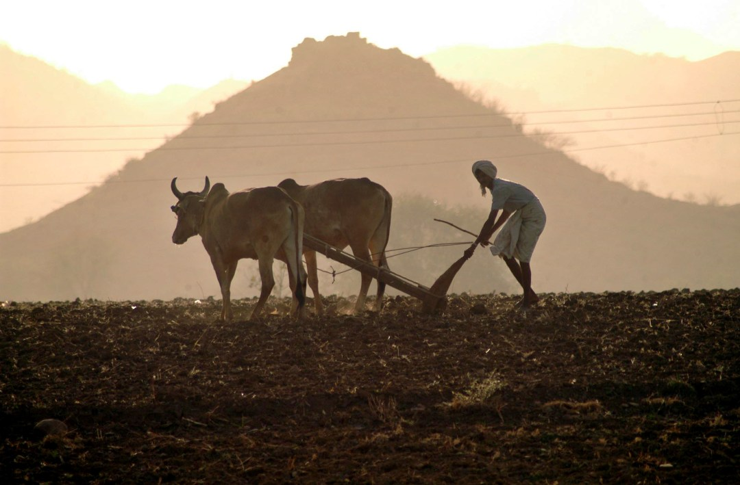 man in field with cow