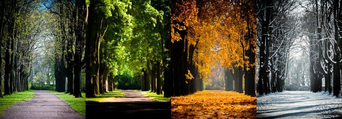 Panels of a shaded road through the four seasons