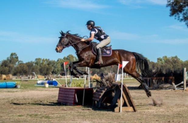 Ku had a promising career as a show horse.