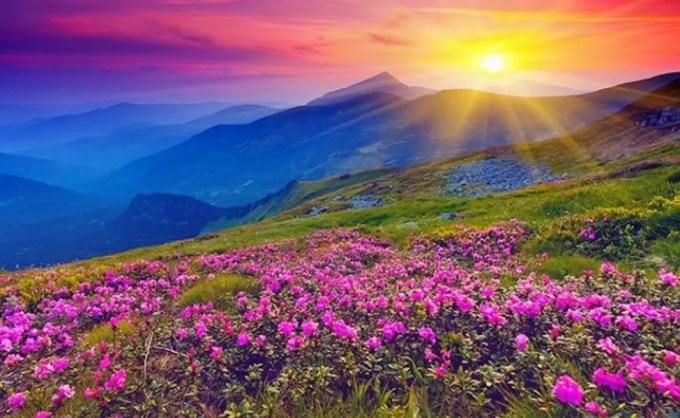 6 Days/5 Nights Trek To Valley Of Flowers, Uttarakhand 2020
