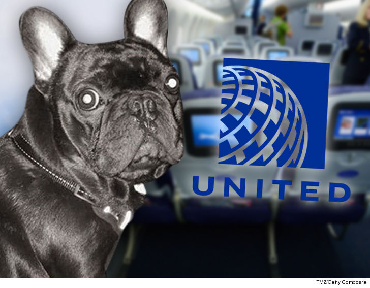 The dog that died of suffocation on a United Airlines flight is about to be  the centerpiece of a looming lawsuit and possible criminal charges …  according ...