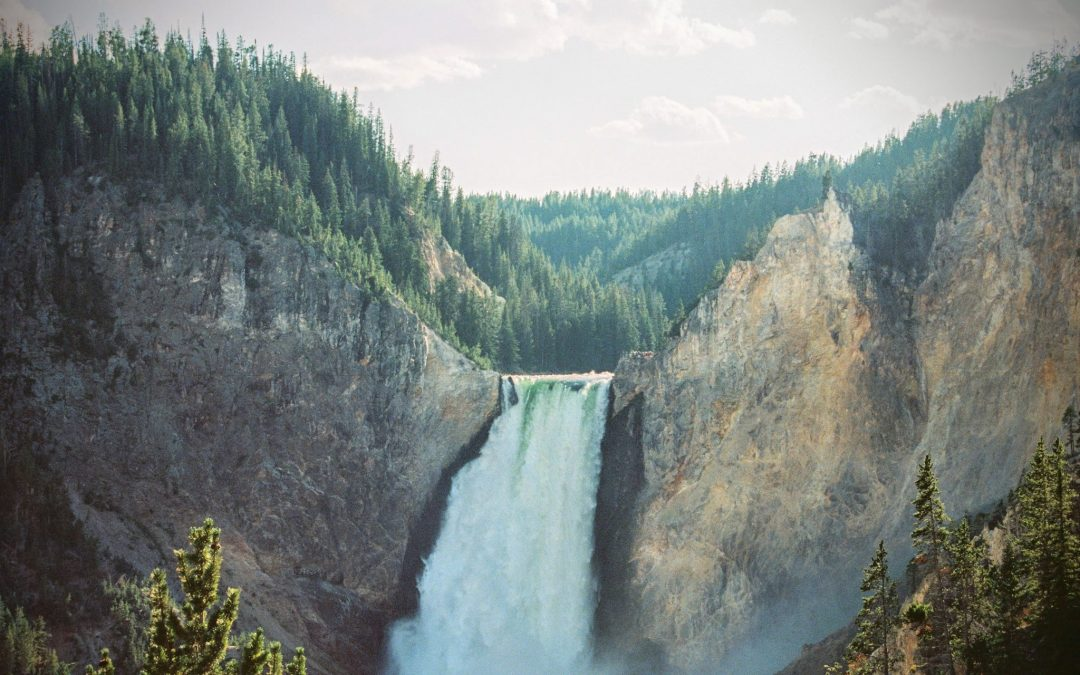 Upper Falls of the Yellowstone River and pine