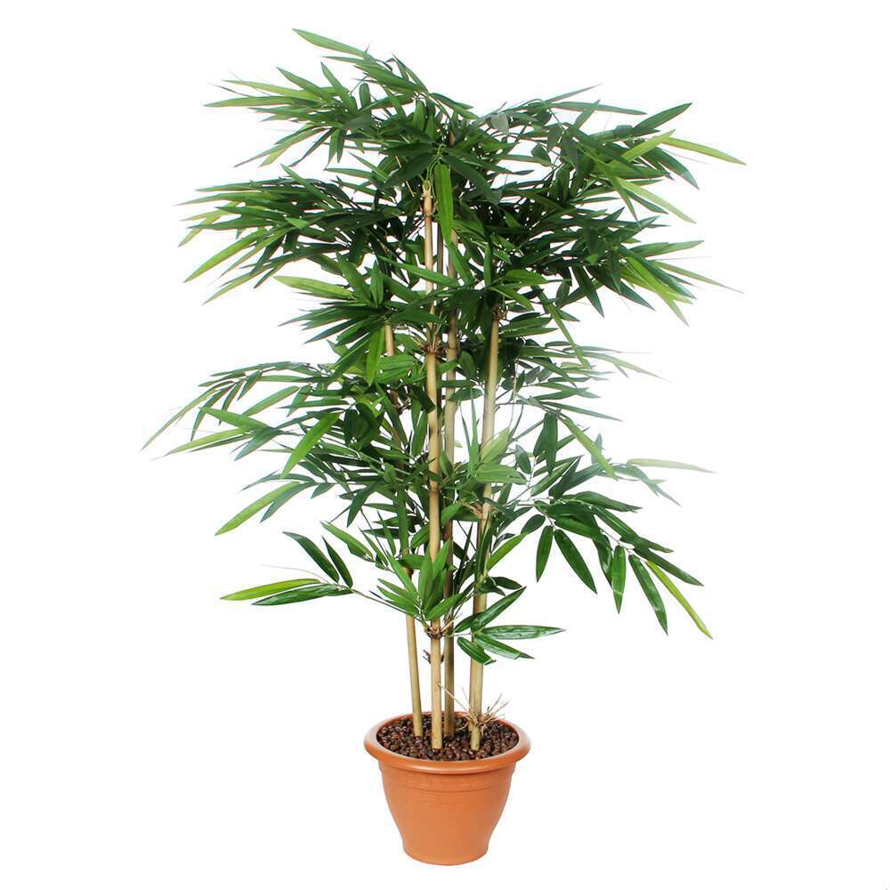 bambou en pot o 29 cm vert o 75 x h 150 cm