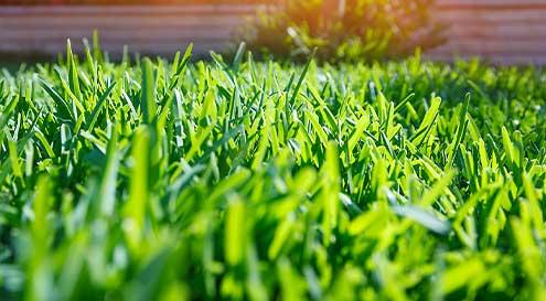 graines de gazon plantes truffaut