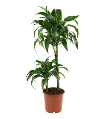 10 plantes d interieur faciles a cultiver
