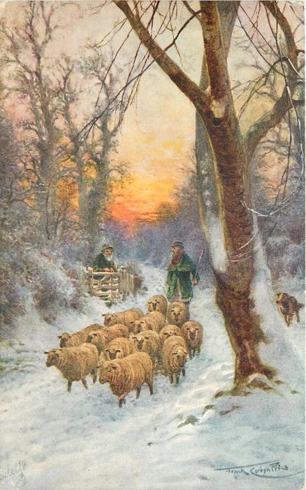 Shepherd In Bright Green Driving Sheep Along Road In Snow