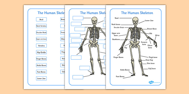 Human Skeleton Labelling Sheets Common Names