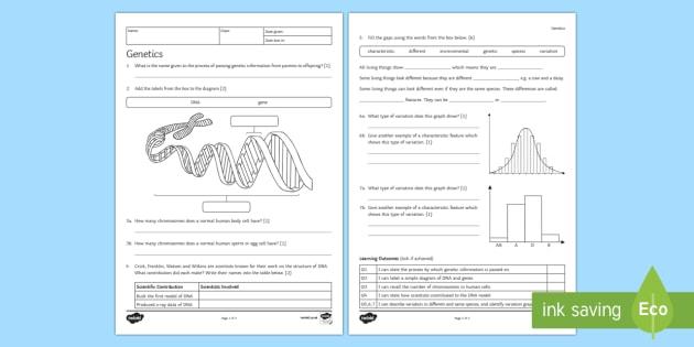 Genetics Homework Worksheet Worksheet Teacher Made