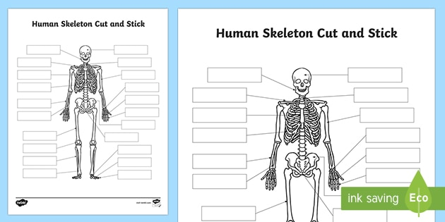 What Is The Skeletal System Skeletal System Answered Twinkl Teaching