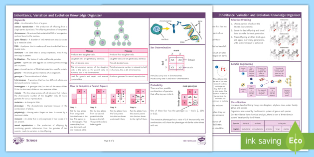 Biology Paper 2 Revision: AQA GCSE Biology 6: Inheritance, Variation and Evolution Knowledge Organiser (Combined)