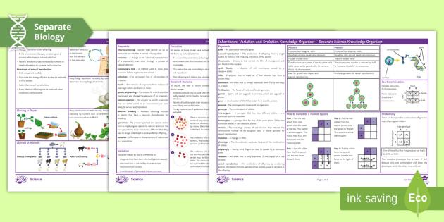 AQA GCSE Biology 6: Inheritance, Variation and Evolution Knowledge Organiser (Separate)