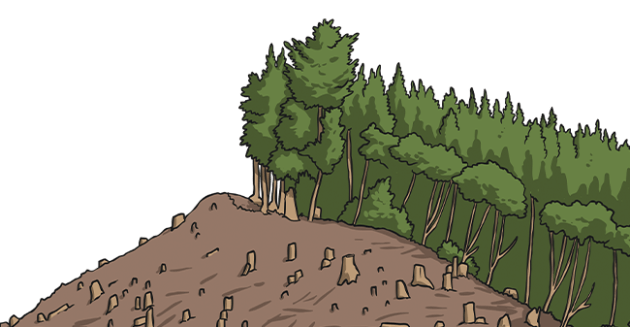 deforestation and forest degradation continue to take place at alarming rates, which contributes significantly to the ongoing loss of biodiversity. What Is Deforestation Answered Twinkl Parenting Wiki