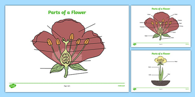 Labelled Flower Worksheet Teacher Made