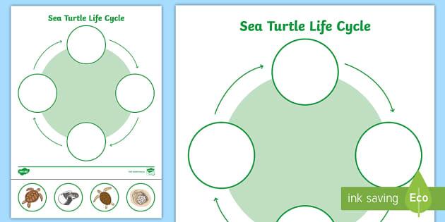 Free Sea Turtle Life Cycle Worksheet Under The Sea Twinkl