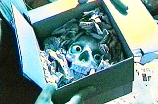 Skull with eyeballs packed into a cardboard box