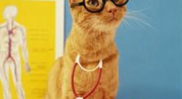 Кіт відчуває наближення хвороби людини і намагається ...