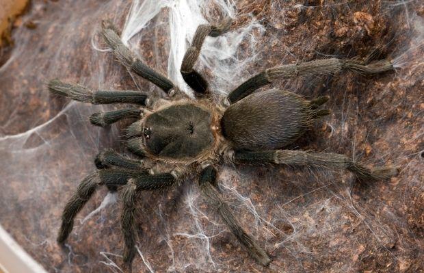Вчені відкрили 18 нових видів павуків \ фото flickr.com/craigmackay