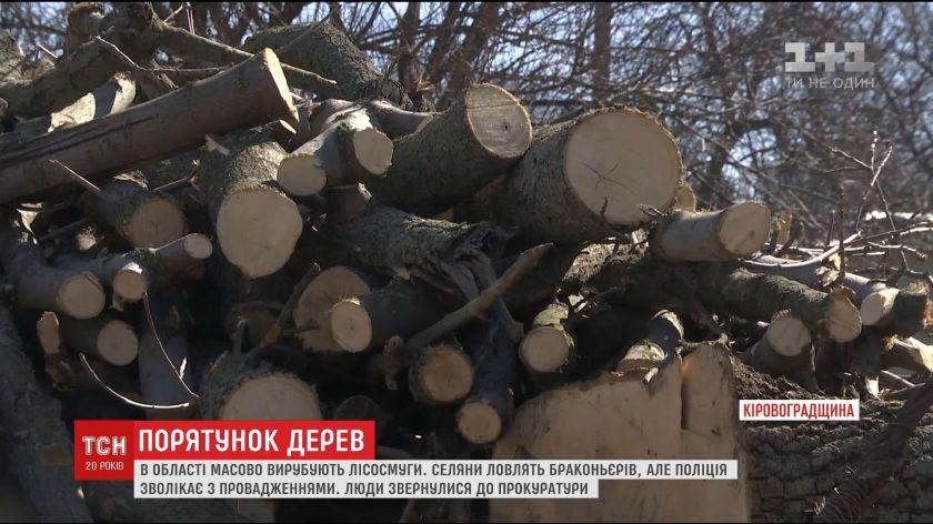 На Кіровоградщині масово вирубують дерева, які спеціально висаджували селяни /