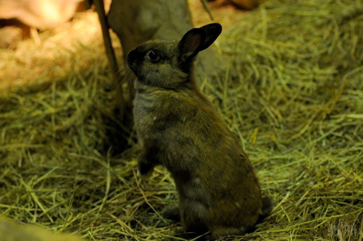 Коли день не задався: кролик утік від кота, але тут же ...