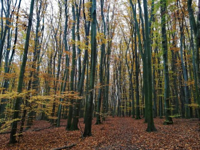 Осінь в Голосіївському лісі теж дуже красива / фото Марина Григоренко