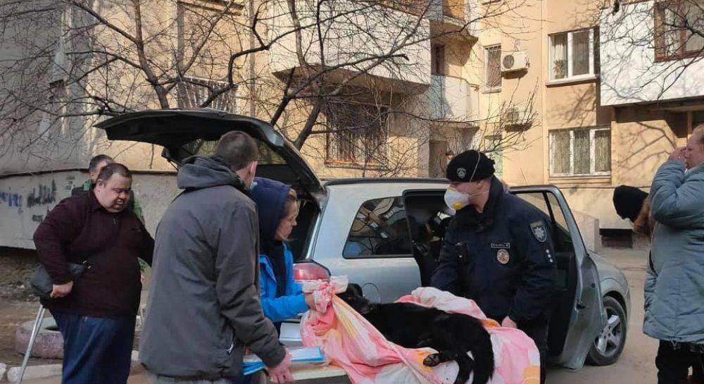 В Одессе при странных обстоятельствах погибла собака, в ее ...