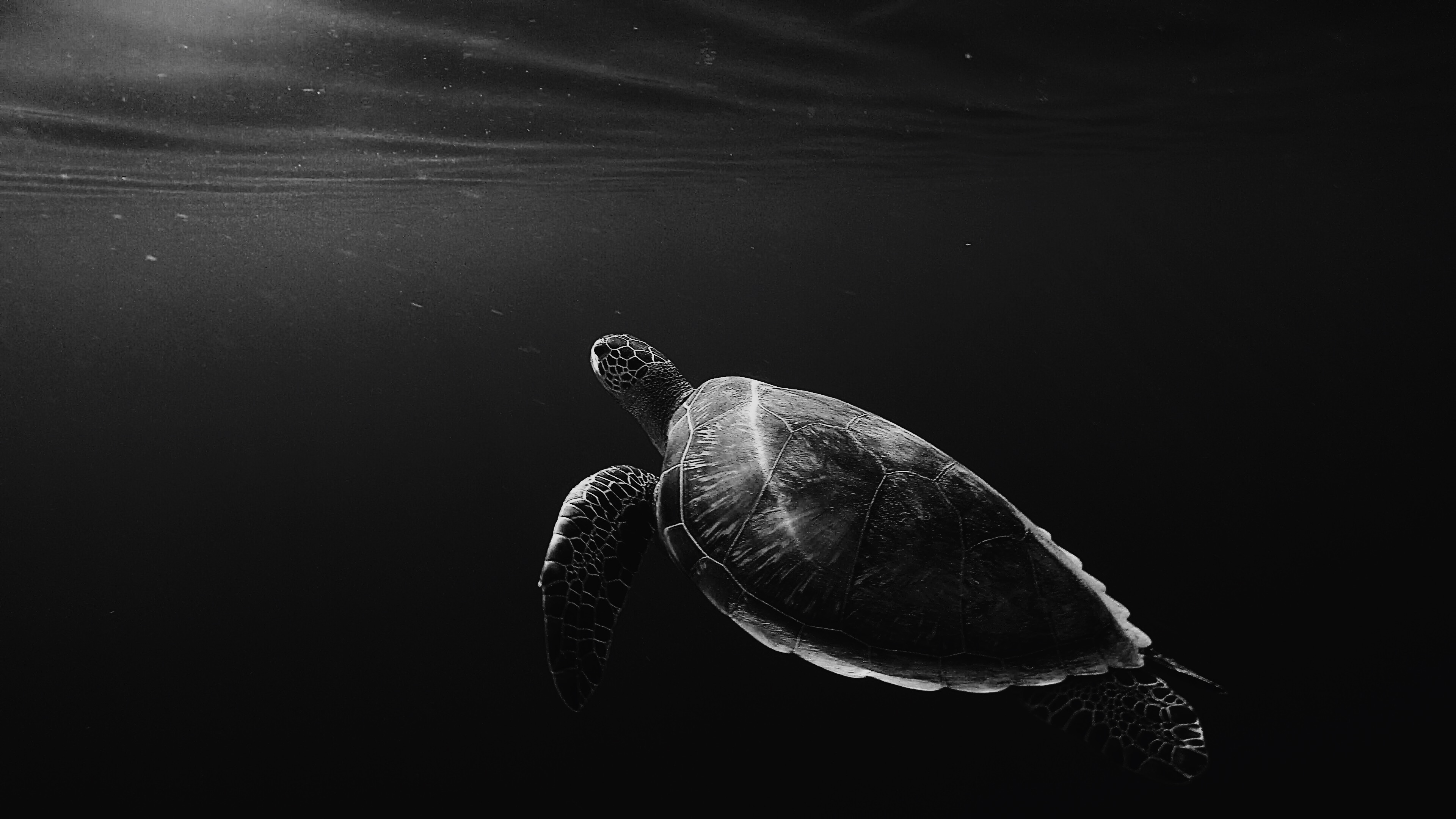 1000  Black Wallpapers  Download    A collection of over 1000  black     silhouette of sea turtle underwater