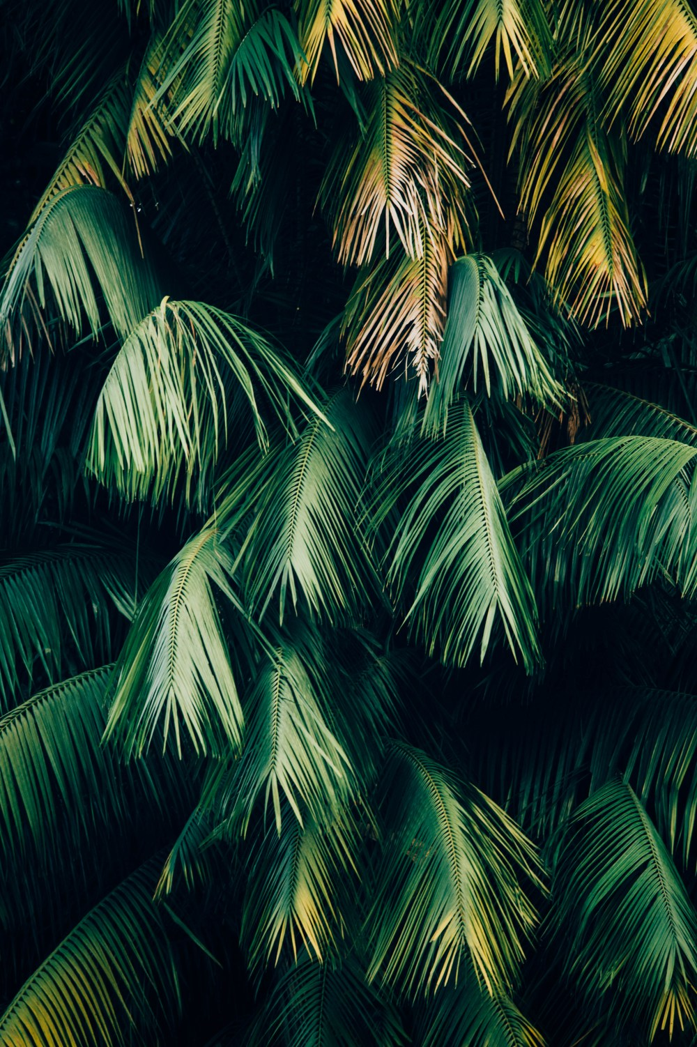 Download Android Wallpapers | Unsplash