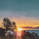 Horse Wallpapers Free Hd Download 500 Hq Unsplash