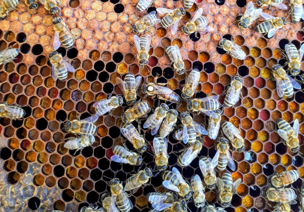Have You Been Eating High-Priced Fake Honey?