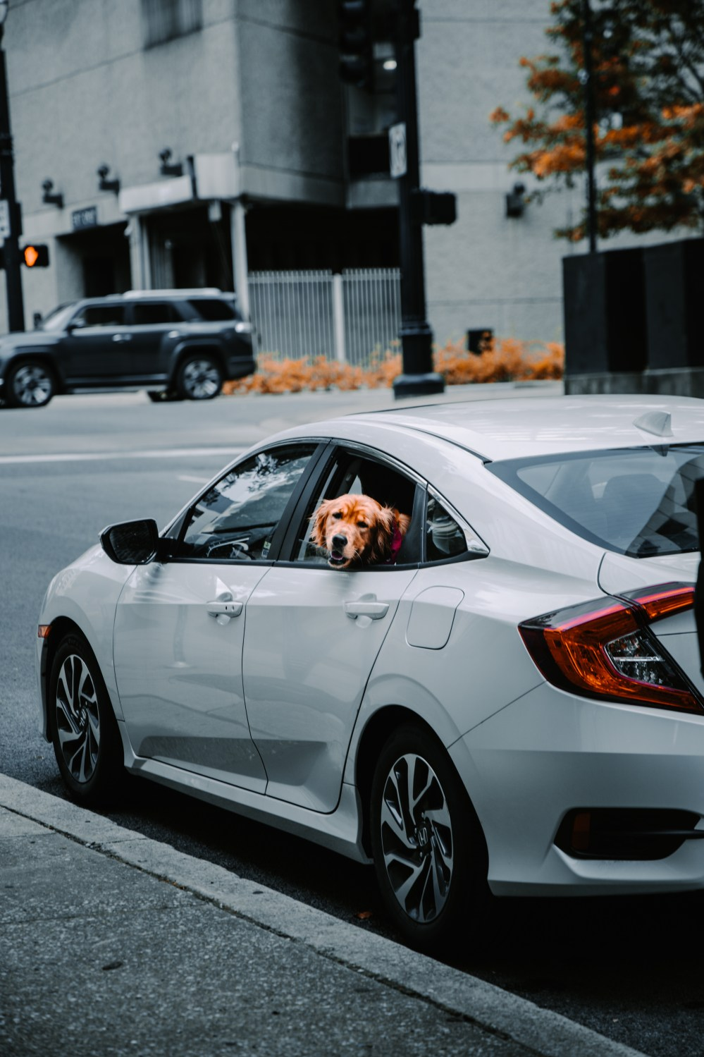 Honda civic si sedan factory performance concept 2008 wallpapers. 500 Honda Civic Pictures Hd Download Free Images On Unsplash
